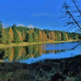 Kilpatrick Hills, Scotland